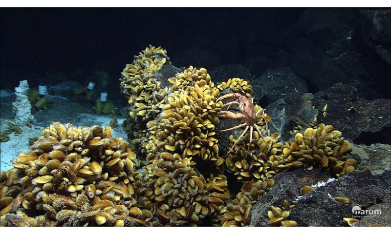 Mussels harbor strains of bacteria in their gills, keeping them prepared for environmental changes