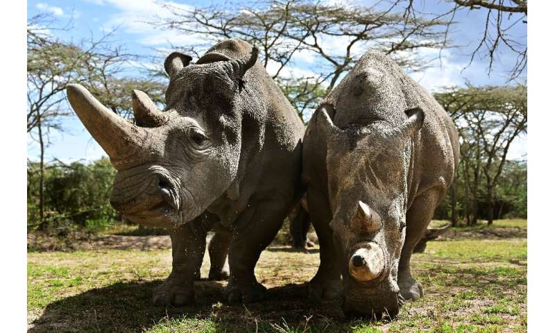 Najin and daughter Fatu are the only surviving northern white rhinos