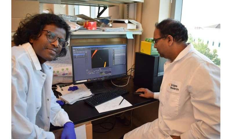 Nanotubes enable travel of Huntington's protein