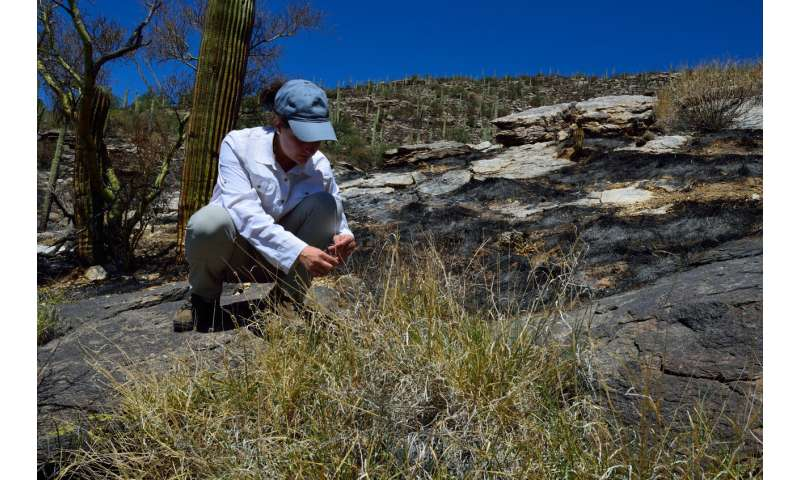 National-scale study shows that invasive grasses promote wildfire