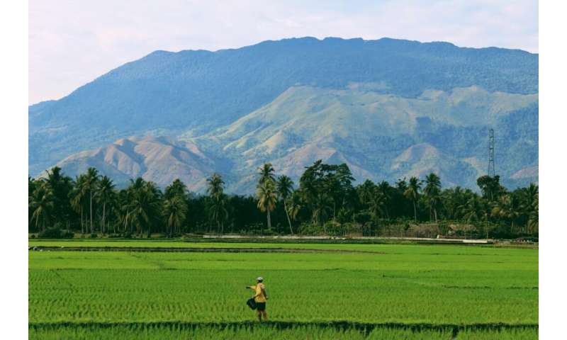 Natural biodiversity protects rural farmers' incomes from tropical weather shocks