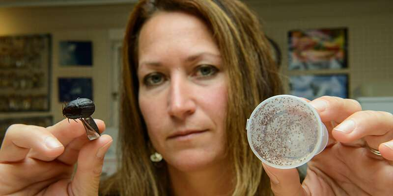 Naturally occurring fungi could curb moose tick plague, UVM entomologists find