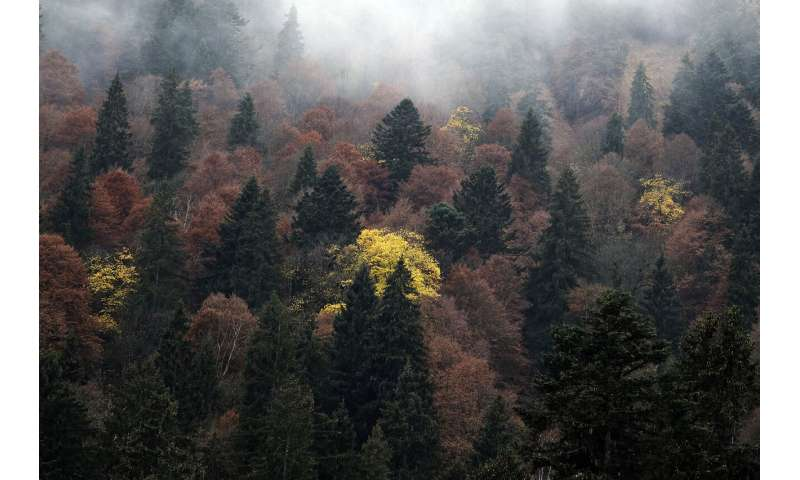 Nature paper offers global map to understand changing forests