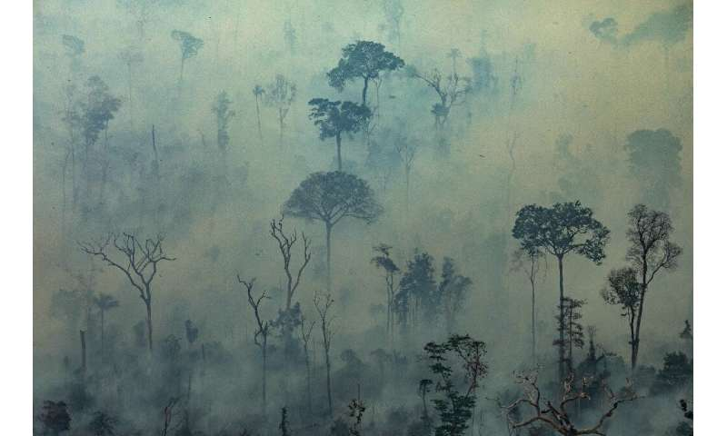 Nearly 80,000 forest fires have been detected in Brazil since the beginning of the year, a little over half in the Amazon region