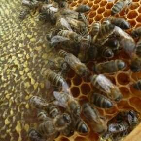 Neonicotinoids: Despite EU moratorium, bees still at risk