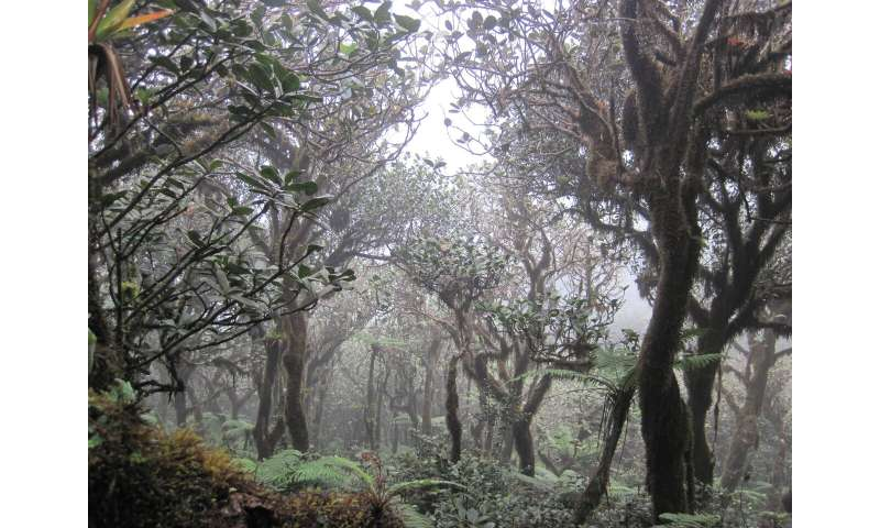 Neotropical cloud forests to lose what most defines them: clouds