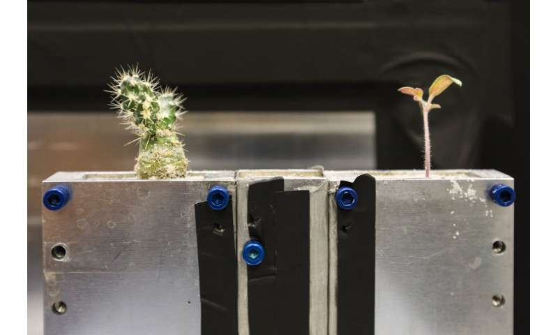 Neutrons investigate tomatoes for insights into interplant chatter