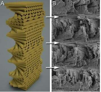 New bio-inspired technology is poised to disrupt the composites industry