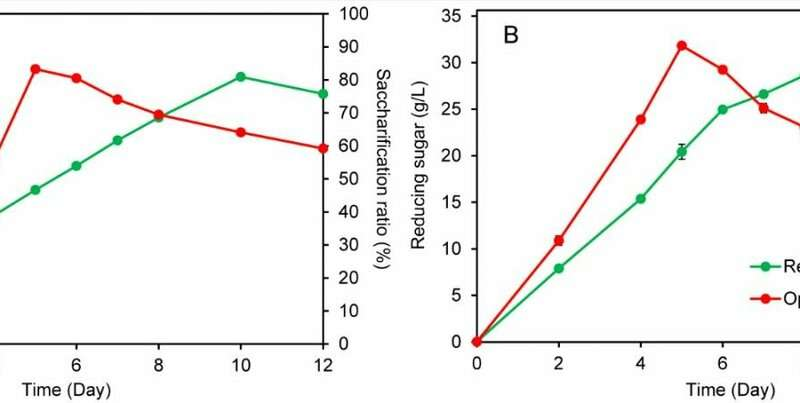 New consolidated bio-saccharification technique for lignocellulose conversion developed