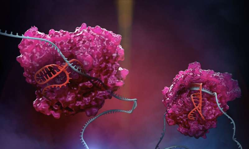 New CRISPR platform expands RNA editing capabilities