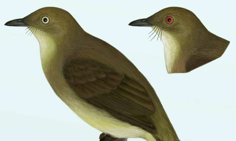 New cryptic bird species discovered