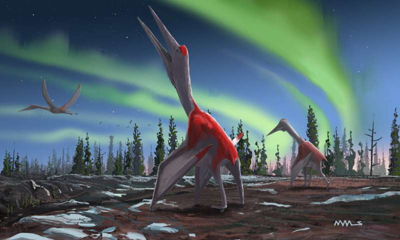 Image result for newly revealed pterosaur is among the largest ever flying animals.