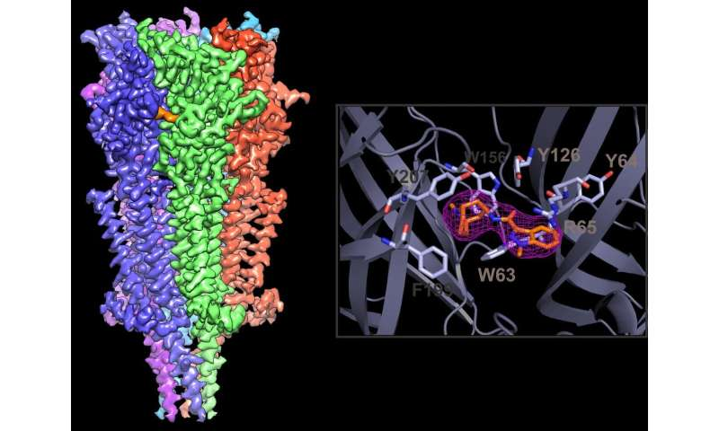 New, high-resolution images reveal clues to improve anti-nausea drugs for cancer patients
