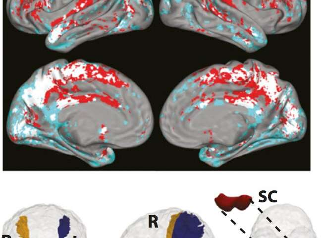 New IISc study sheds light on how a midbrain region helps us pay attention