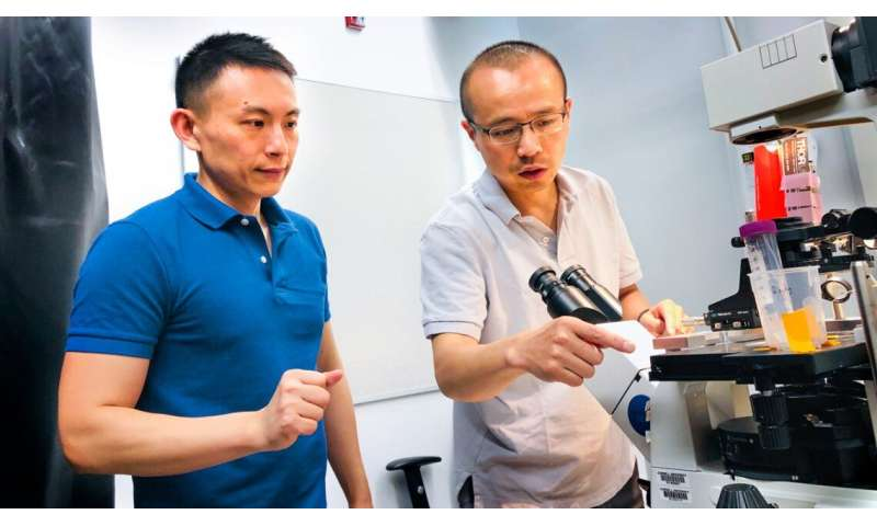 New imaging method aids in water decontamination