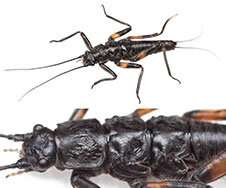 New insect species discovered on the slopes of the Maungatua Range