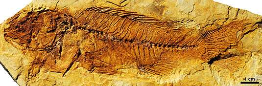 New light on cichlid evolution in Africa