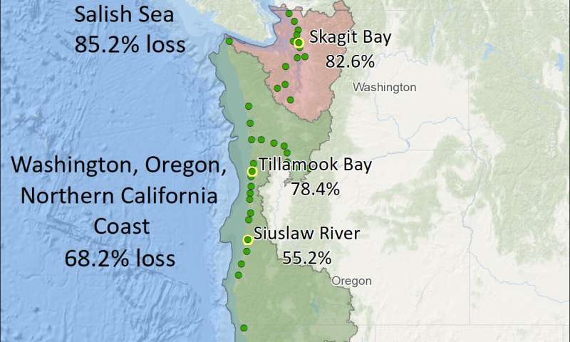 New mapping reveals lost west coast estuary habitat