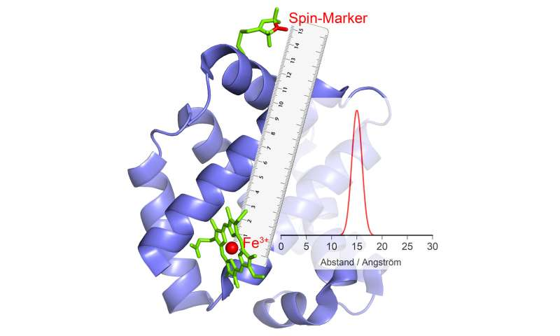 New method enables 'photographing' of enzymes