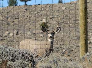 New poll examines public opinion on wildlife and migration corridors in Wyoming