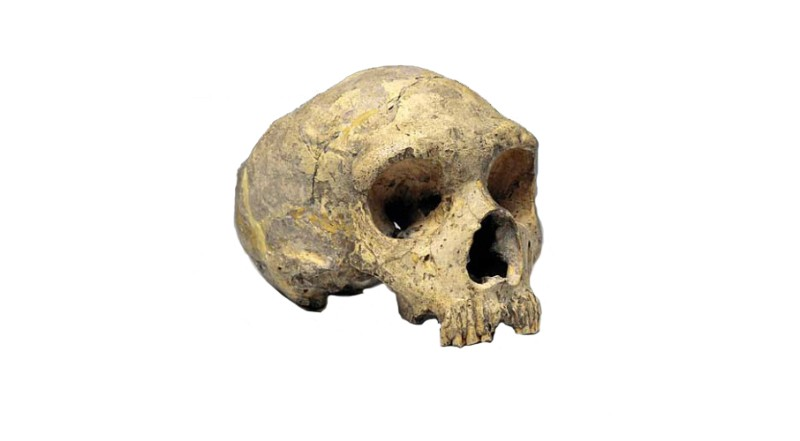 New preparation method with Gibraltar Neanderthal skulls leads to improved access to ancient DNA