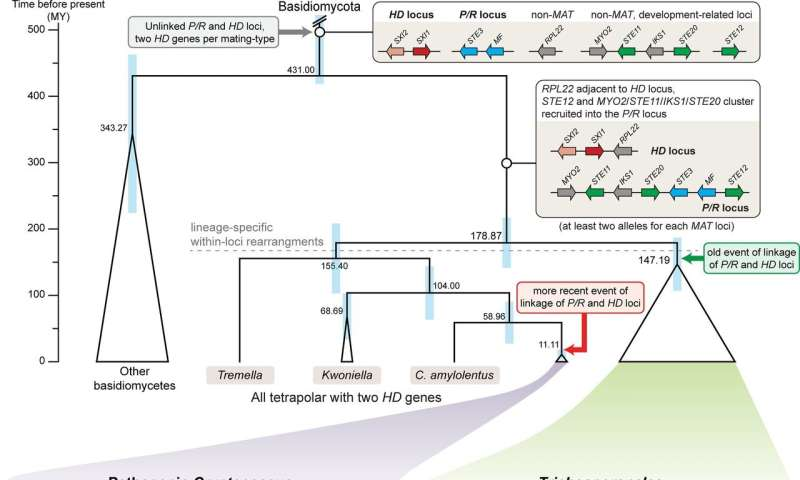 New results on fungal genetics