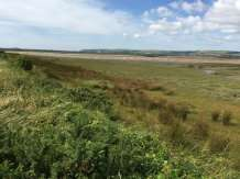New study demonstrates benefits of undervalued saltmarsh