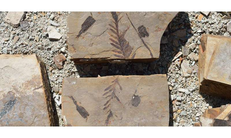 New study of fossil plants shows the emergence of the Pacific Northwest's temperate forests