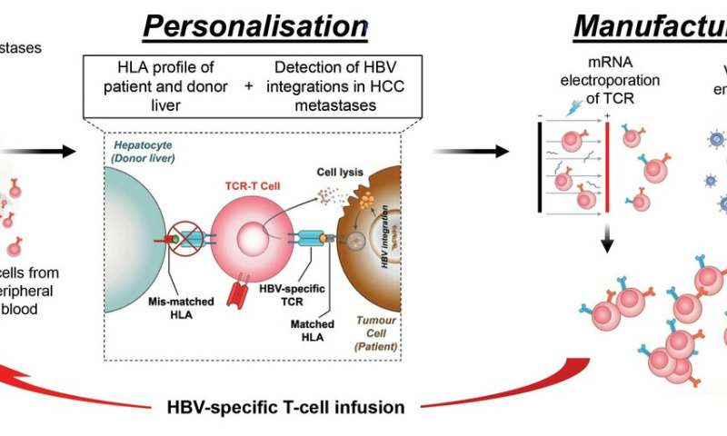New therapy approach points to potential treatment of liver cancer patients with hepatitis B virus infection