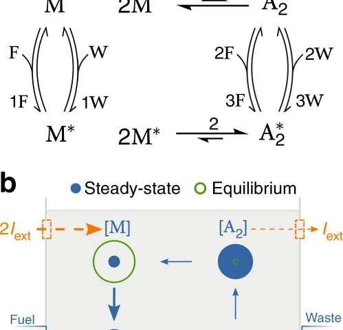New thermodynamic framework for cells