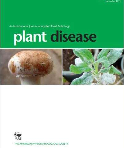 New tool to detect blackleg disease in potato has widespread application