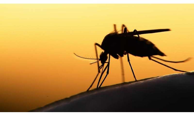 New vaccine for malaria could be more effective