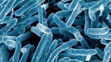 New vaccine targets killer disease tuberculosis