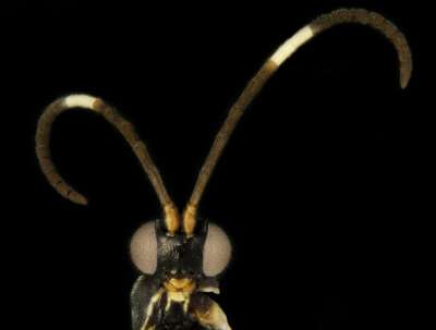 New wasps named after biscuits and Doctor Who aliens