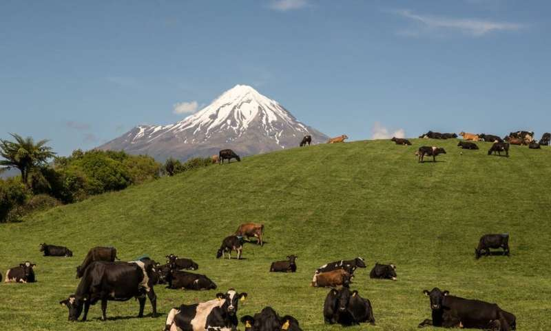 New Zealand introduces groundbreaking zero carbon bill, including targets for agricultural methane