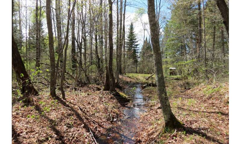 Nitrogen pollution's path to streams weaves through more forests (and faster) than suspected
