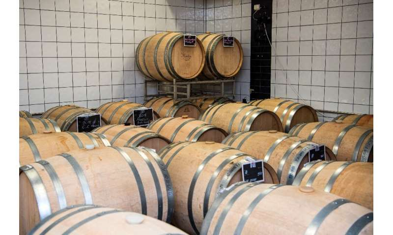 Nordic winegrowers have begun recruiting experts, often from abroad