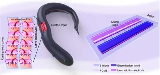 Novel Chinese nanogenerator takes cue from electric eels
