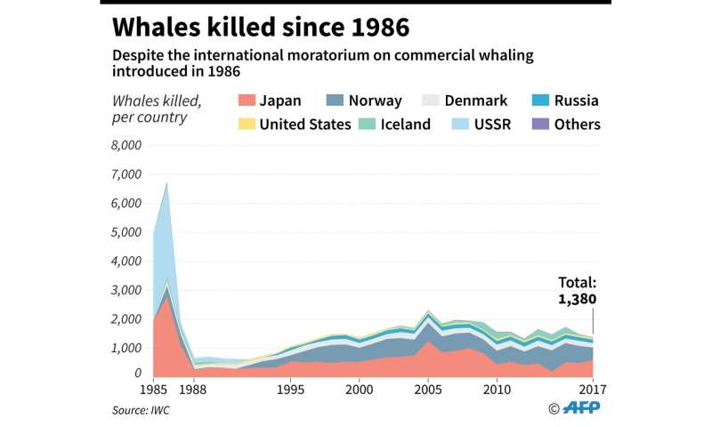 Number of whales killed each year by country despite the international moratorium on commercial whaling introduced in 1986.
