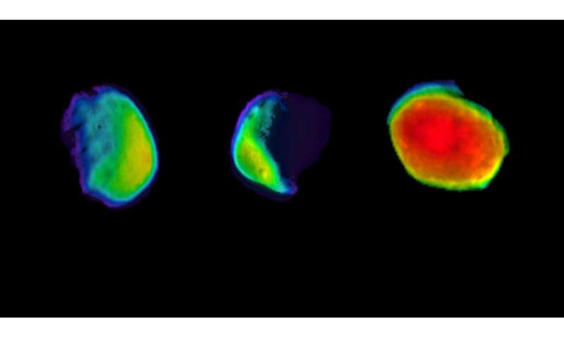 Odyssey's three views of Martian moon Phobos