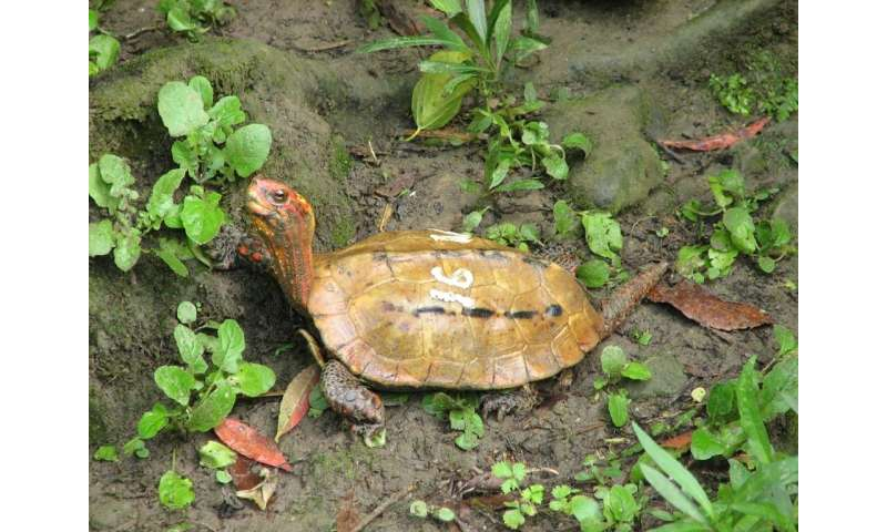 Okinawa Zoo and Museum released photos of the types of stolen turtle including the rare Ryukyu leaf species
