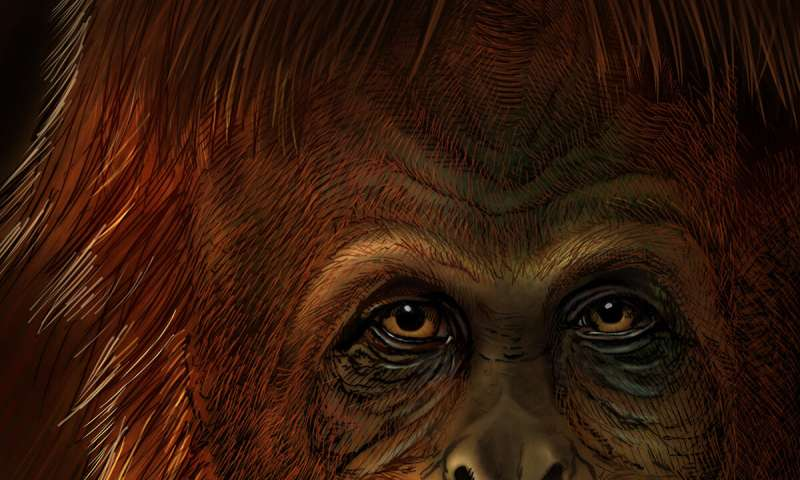 Oldest molecular information to date illuminates the history of extinct Gigantopithecus