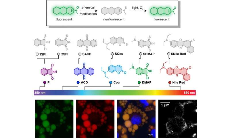 One-atom switch supercharges fluorescent dyes