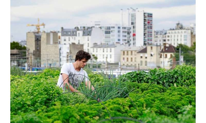 Race on to make urban agriculture viable, durable