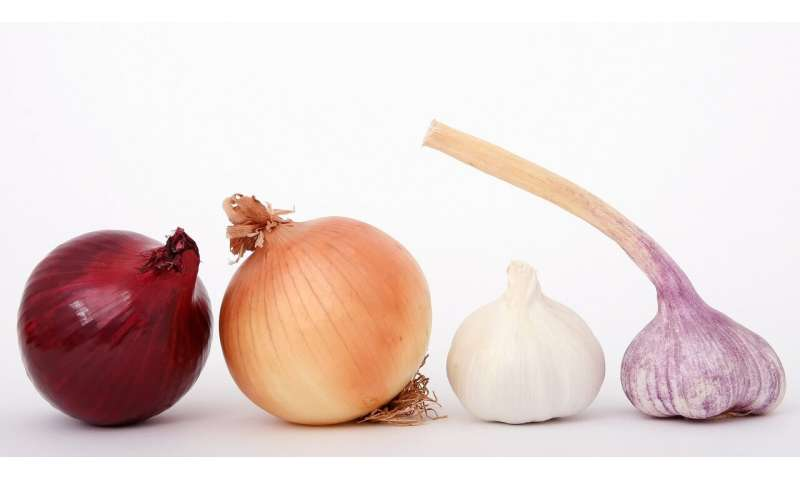 Onions, garlic may be recipe for reducing breast cancer risk