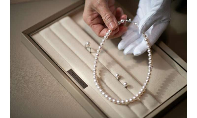 Only around five percent of the oysters harvested will result in pearls of sufficient quality to adorn the windows of chic jewel