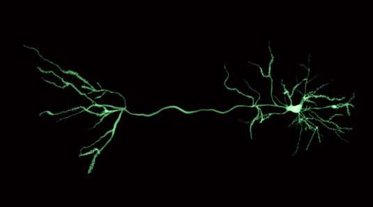 Opening the black box of dendritic computing