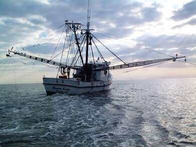 Opinion: Was the EU's ban on electric fishing the right decision?