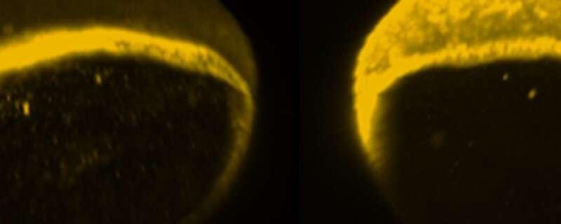 Optical switch illuminates cell development