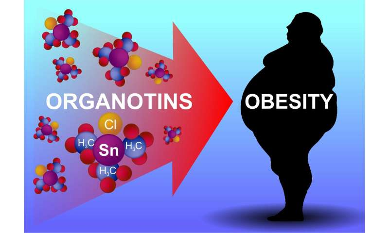 Organotin Poisoning May Cause Obesity, RUDN Medics Say